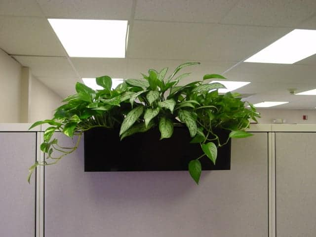 Cubicle - Plants