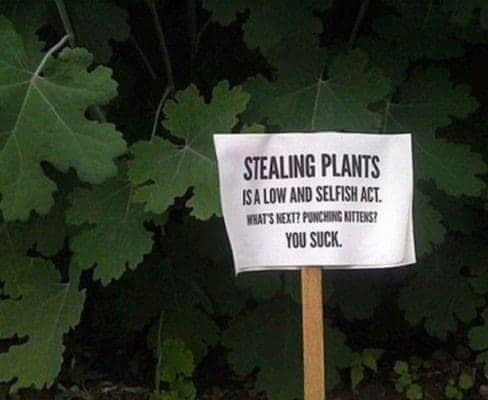 Plants - Theft