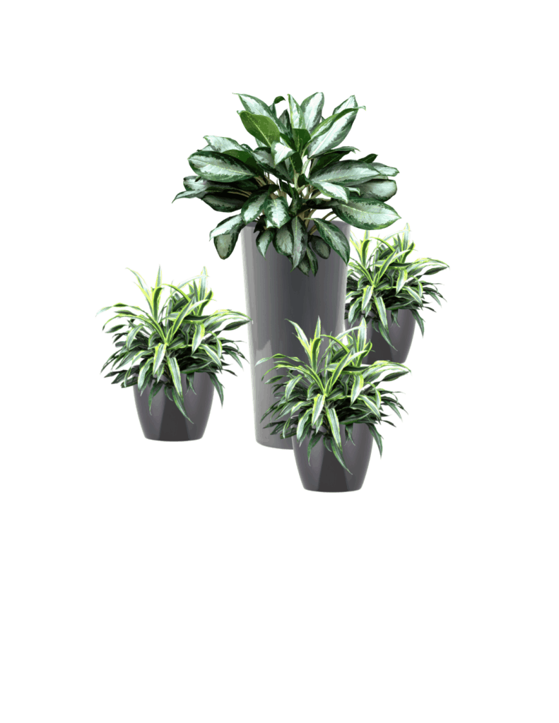 Houseplant - Plants