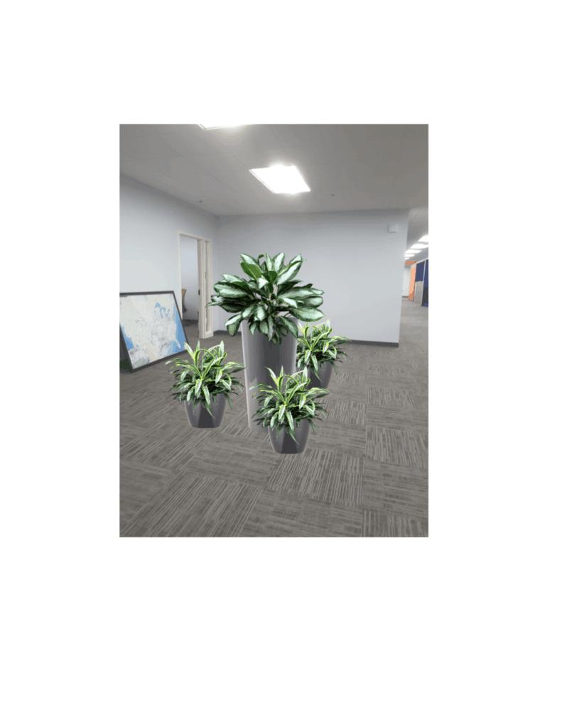 Plants - Rock garden