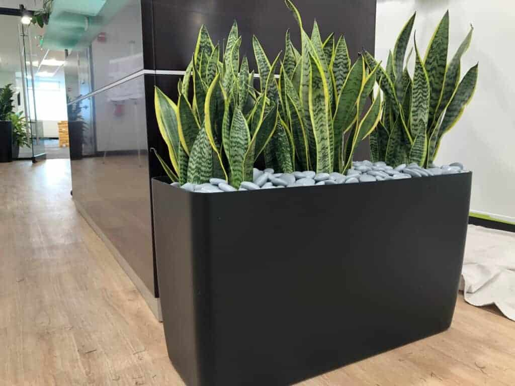 plants in a rectangle in a manchester nh office