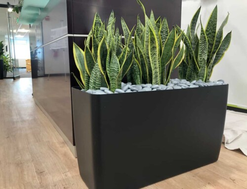 Office Planter, Waltham MA