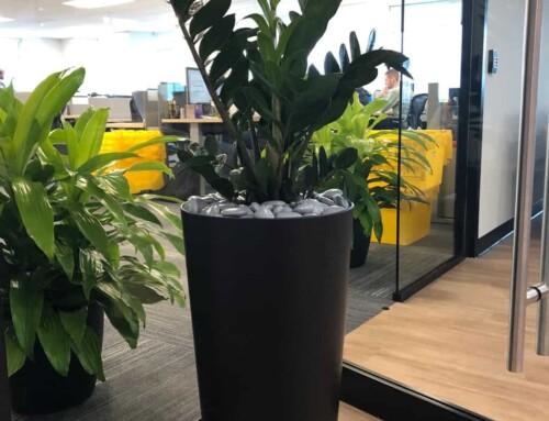 ZZ Plant Waltham MA
