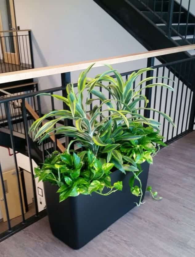 plants along stairwell in a low rectangle planter