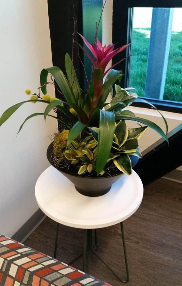 flowering plants taunton ma