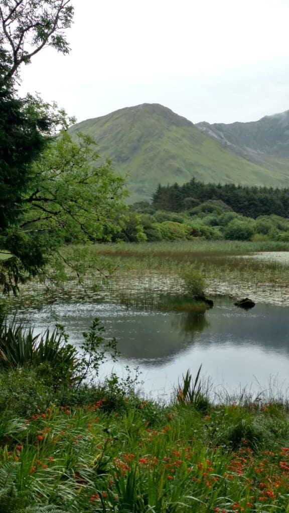 lake with greenery