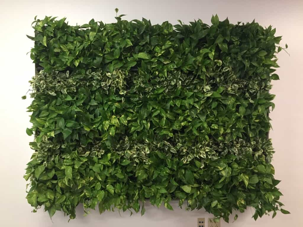 plant wall installation hudson nh