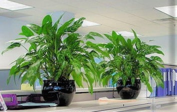 tabletop plants in offices located in braintree ma
