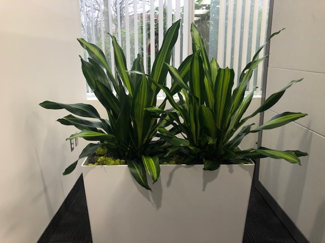 andover ma office planter