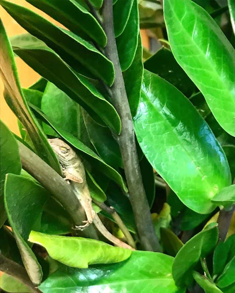 office plant with lizard