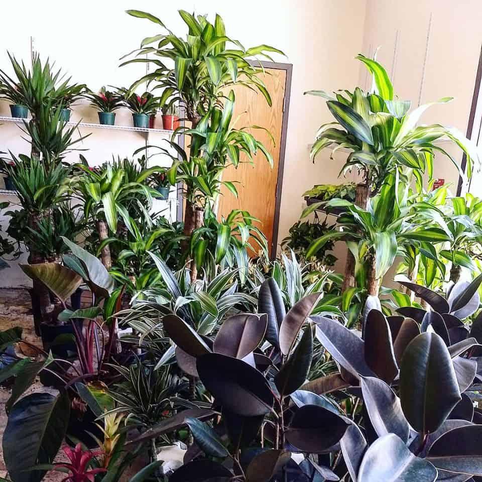 a warehouse full of plants at EnviroGreenery in Nashua NH