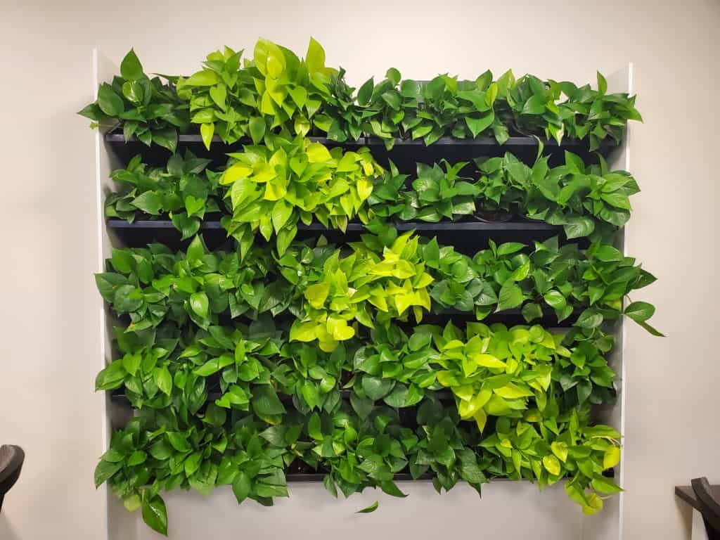 A live plant wall in Westborough, Massachusetts