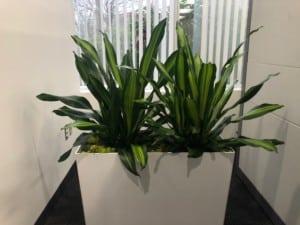 white rectangle planter in andover massachusetts
